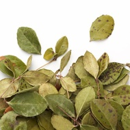 Wintergreen from Camellia Sinensis