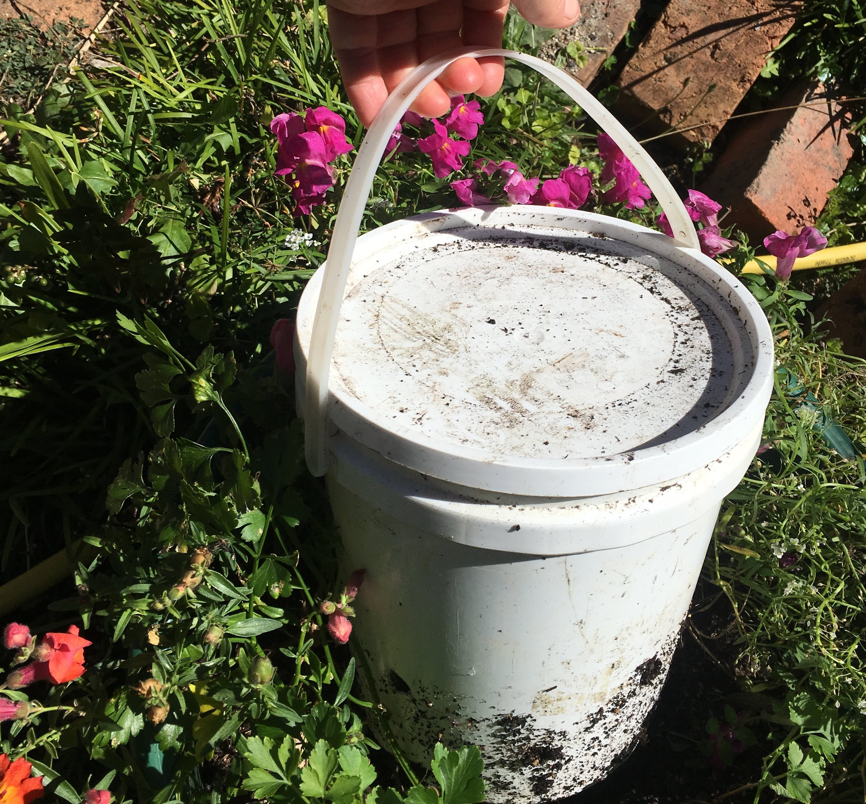 Bucket with flowers growing around it