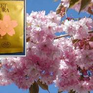 Sweet Sakura Black Tea from Tea Boutique