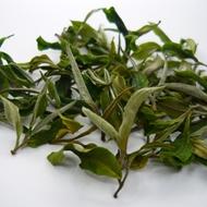 CLOUD - 9 – CLONAL WHITE TEA. (1ST FLUSH – CLONAL – EXOTIC) from DARJEELING TEA LOVERS