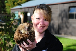 Abby Bruce with Tipsy, one of the resident hedgehogs at Broomfield Hall