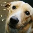 Դինգո Էնիմել լովերս – Dingo Animal lovers