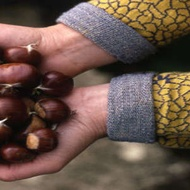 Naturally Nutty from Adagio Teas Custom Blends