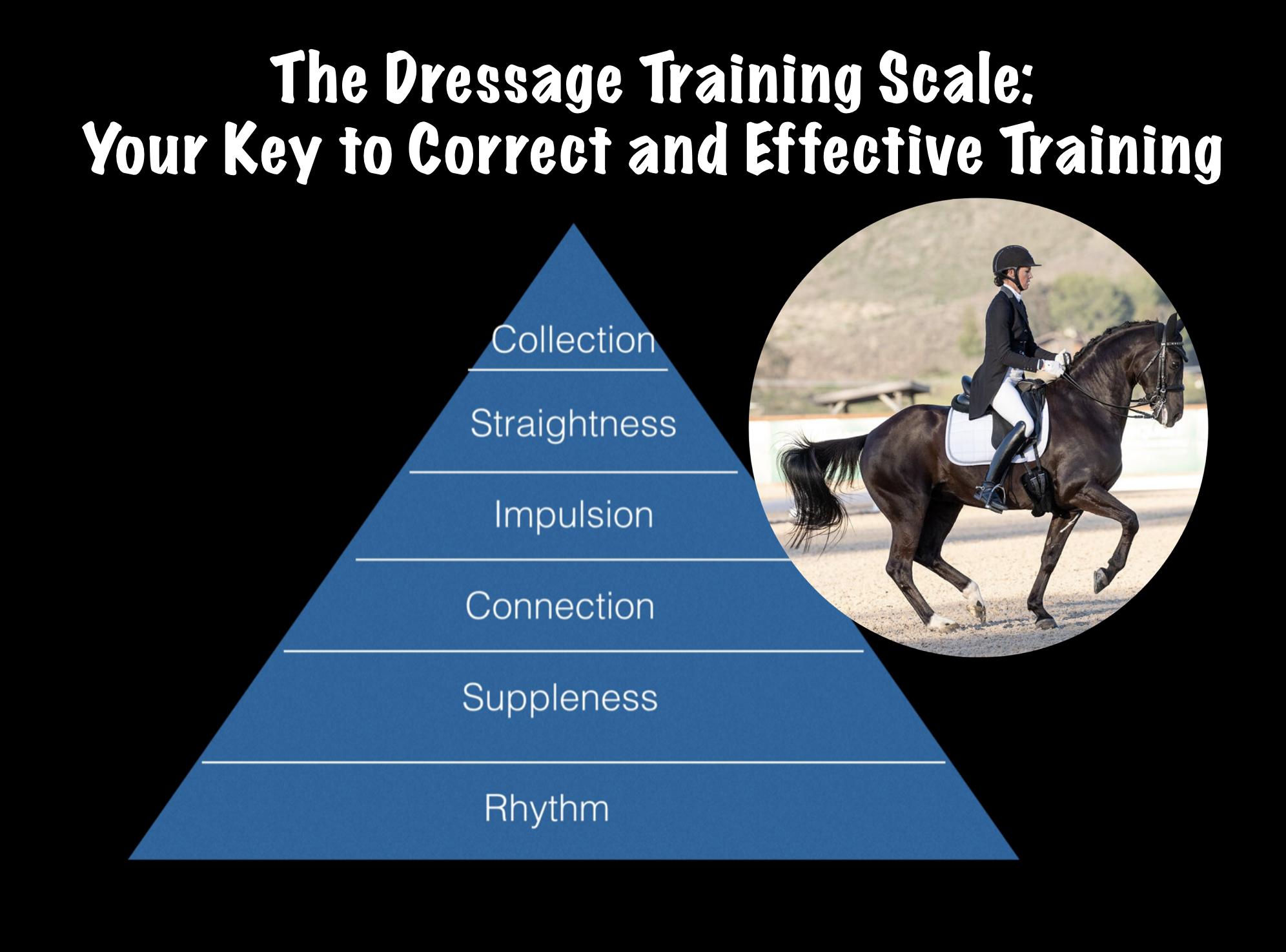 Dressage Training Scale Amelia S Dressage Academy