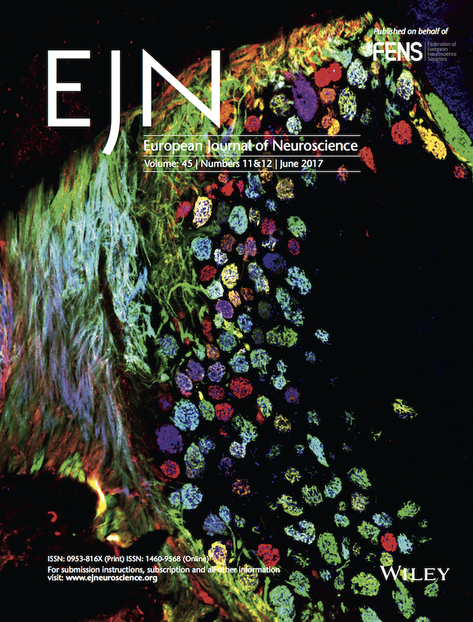 Template for submissions to European Journal of Neuroscience (EJN)
