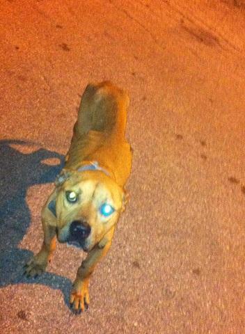 Sunnyside Dog Rescue