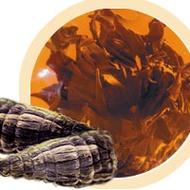 Black Beauty from Numi Organic Tea