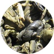 Organic Gunpowder from The Tea House
