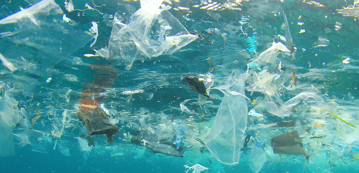 Why We Need to Sort Garbage