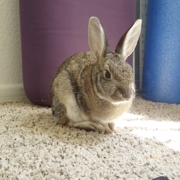 jen-bunnypng