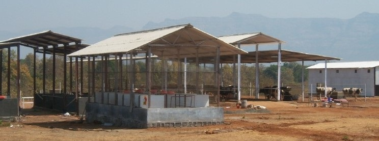 housing for successful dairy farming