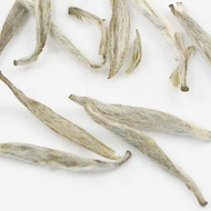 Silver Needle from Zhi Tea