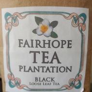 Black Tea from Fairhope Tea Plantation