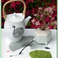 Kenya Rhino Matcha White Tea from Green Tea Lovers