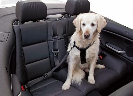 saugos-dirzas-suniui-automobilyje