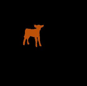 One calf a year
