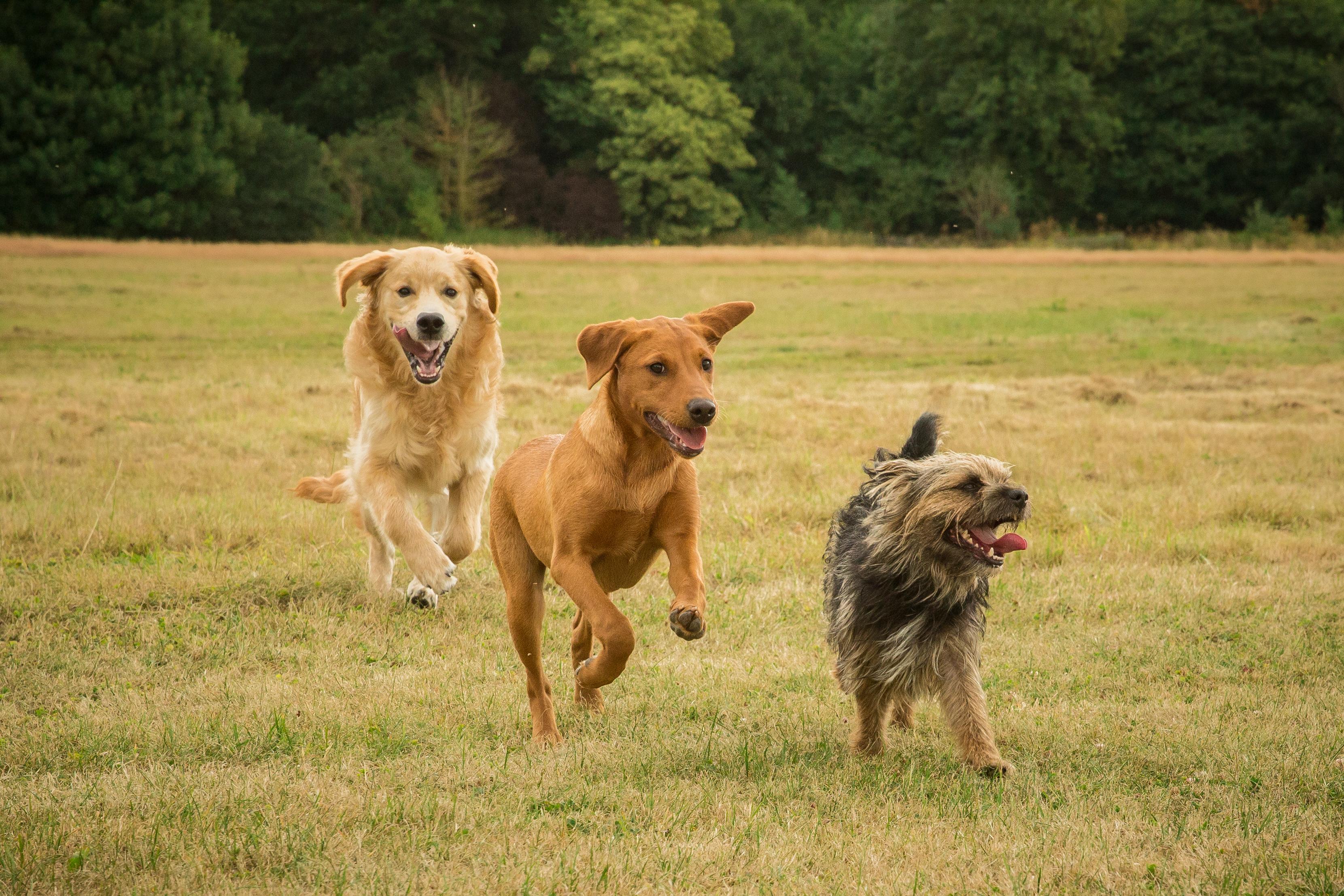 We Love Training Dog Behaviour Training