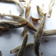 Jasmine Silver Needle (King Grade) from tea-adventure