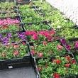 Կանաչ դրախտ բույսերի աշխարհ – Kanach draxt