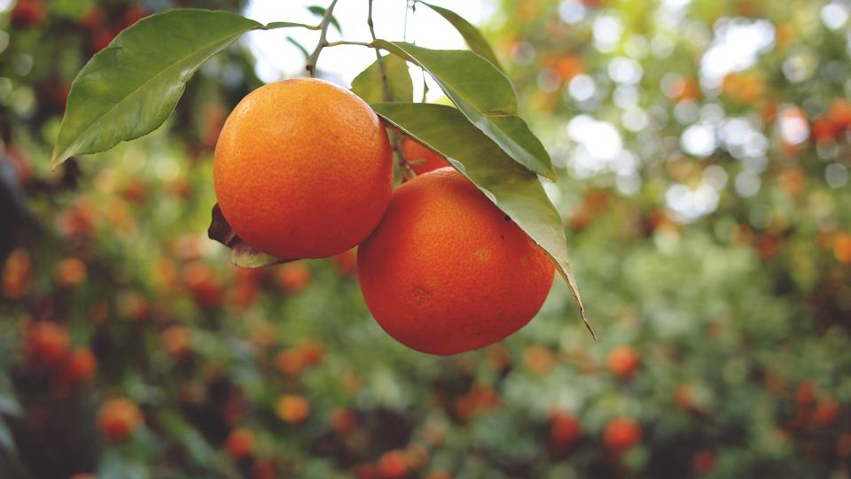 MongoDB vs RethinkDB: Comparing Oranges with Oranges