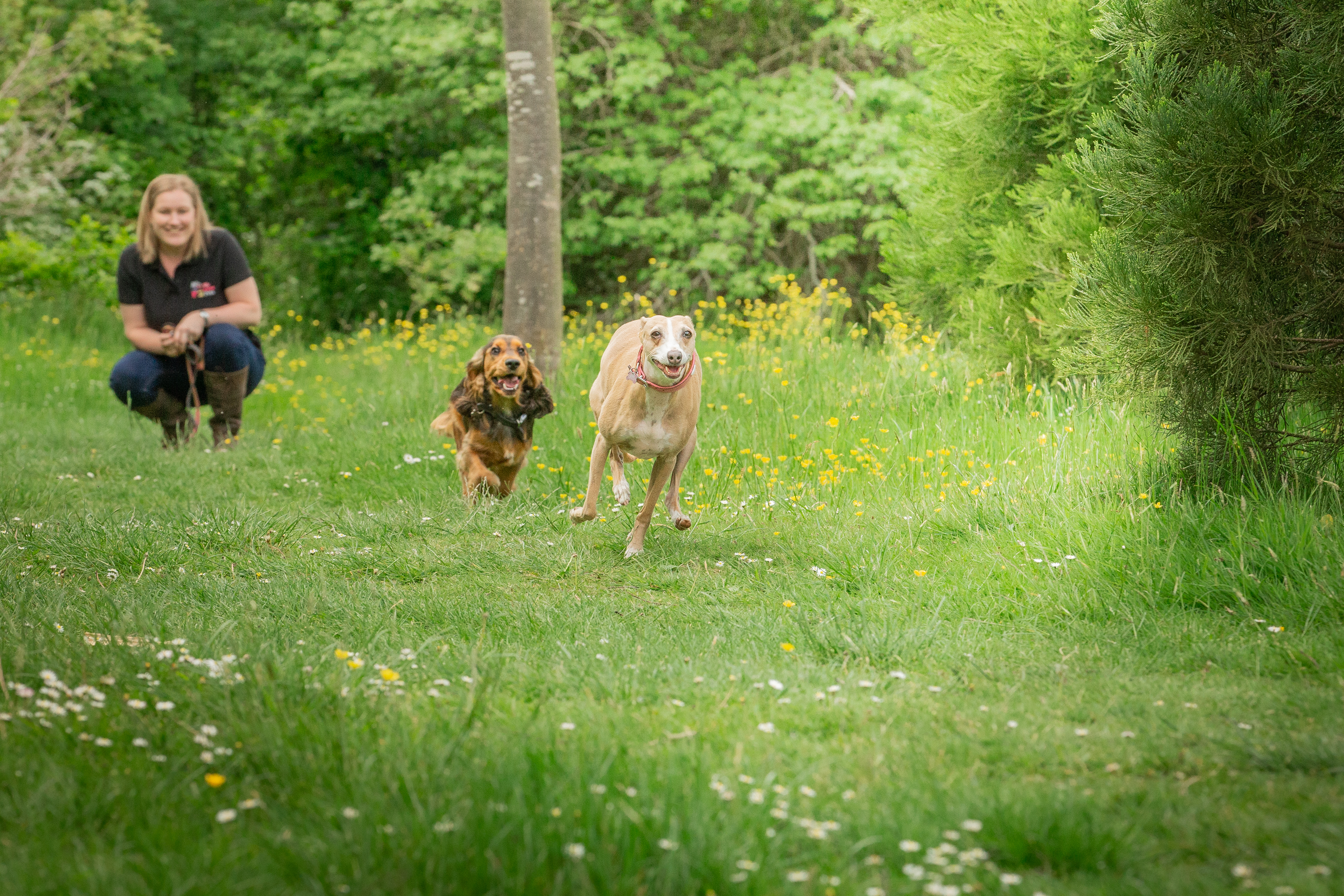 Level 2 City & Guilds Certificate of Technical Competence in Dog Walking