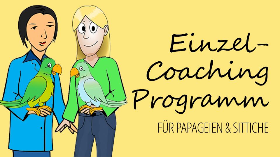 Einzel-Coaching-Programm