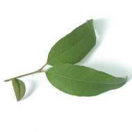 Organic Lemon Myrtle from Strand Tea Company