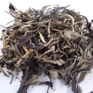 2011 Spring Old Tree Yue Guan Bai (White Moon Light ) Jinggu Tea from JK Tea Shop