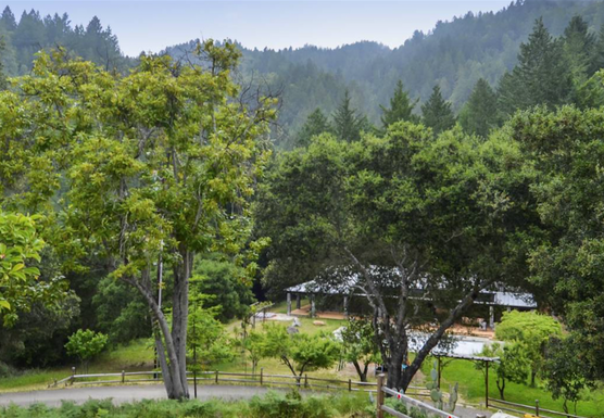 Spring Cleaning for the Soul: A Yoga & Meditation Retreat