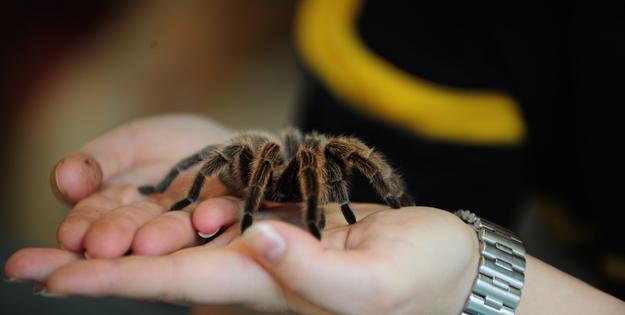 broomfield-spidersjpg