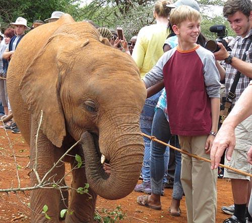 orphan baby elephant