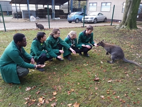 animal-care-students-feed-the-male-wallaby-with-the-female-in-the-backgroundjpg