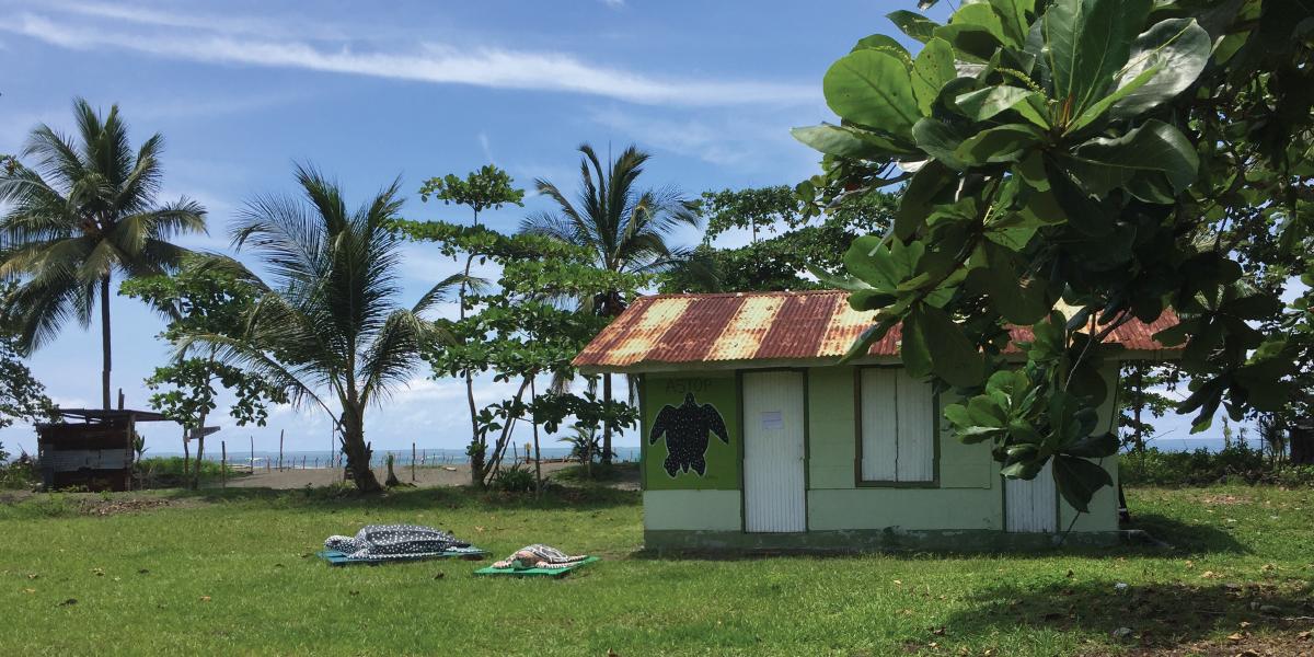 Volunteer with Turtles in Costa Rica - Certificate in International Volunteering