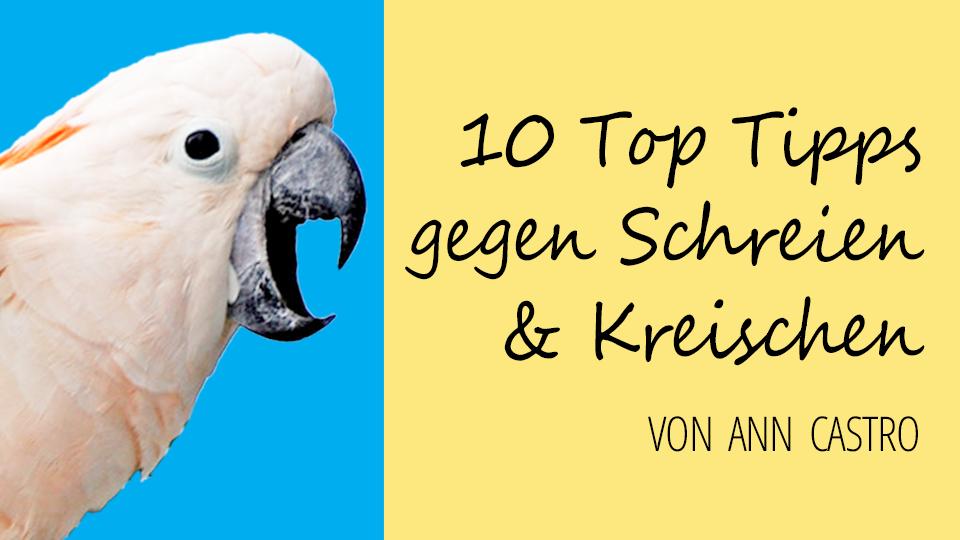 Tipps gegen Schreien & Kreischen bei Papageien & Sittichen