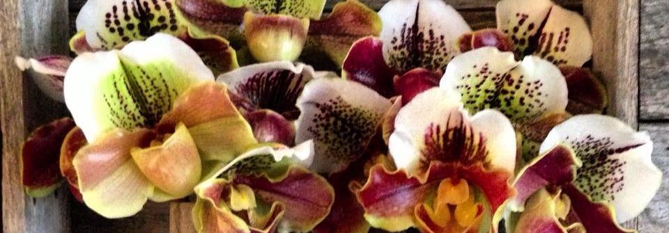 Samambaia Flowers cover image | Sydney | Travelshopa