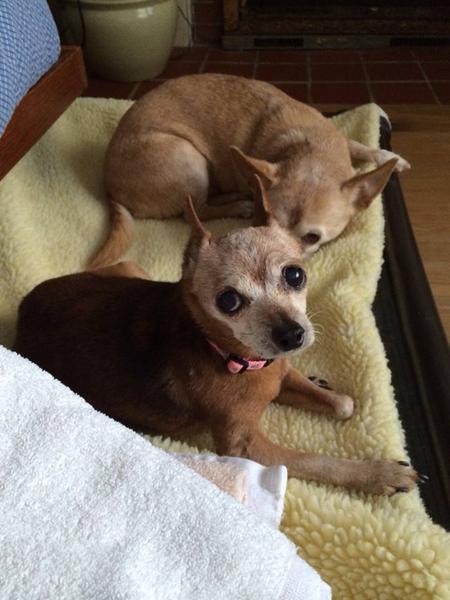 Kathy Williamson Dog Rescue