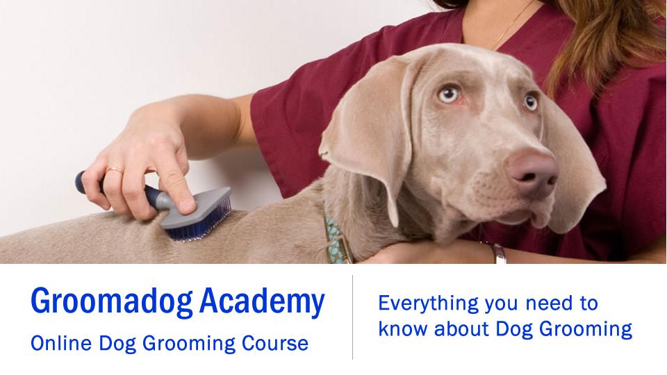 Groomadog Academy Online Dog Grooming Course Groomadog Course Online