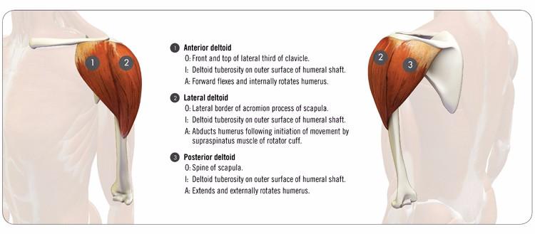 Basic Anatomy Of Training