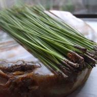 Pine Needle Green Rooibos from Madametj's Fresh Garden