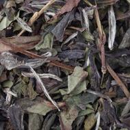 1837 White Tea from TWG Tea Company