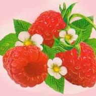 Raspberry Nectar from Red Leaf Tea