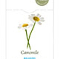 Camomile (Relaxing) from Heath and Heather