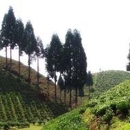 Serenitea: Inara from Adagio Teas Custom Blends