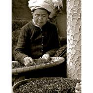 Jing Mai Fermented Puerh from JalamTeas