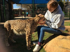 stacey-higgs-with-tarka-the-cheetah-during-one-of-annual-college-field-trips-to-south-africajpg