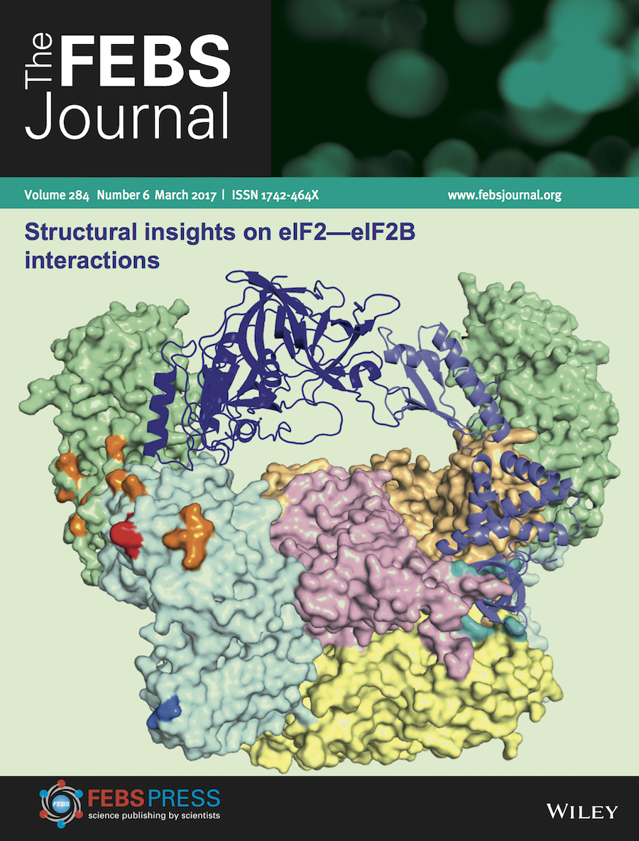 Template for submissions to The FEBS Journal