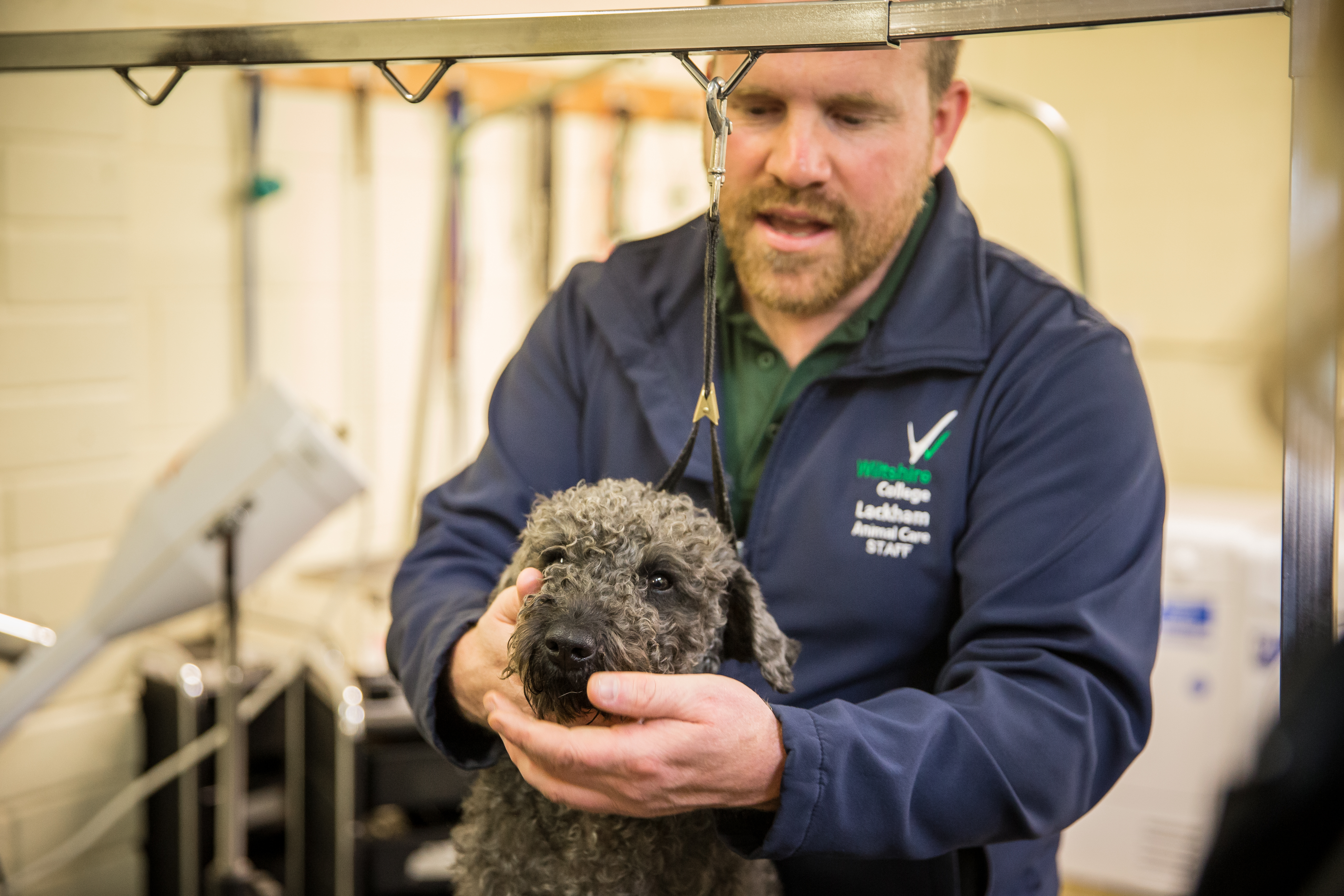 We Love Training Pet First Aid Course