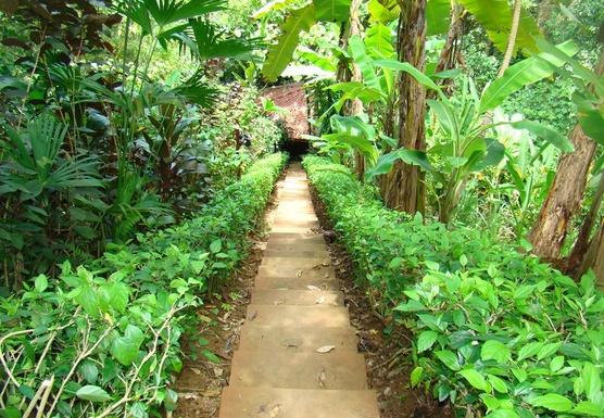 6 Days Juice Detoxification and Yoga Retreat in Costa Rica