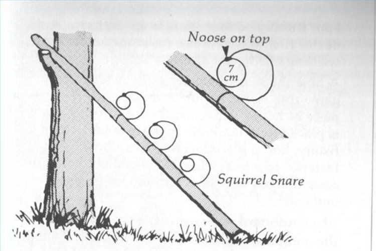 Squirrel Pole