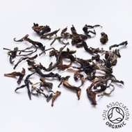 Organic Arya Ruby First Flush Darjeeling from Canton Tea Co